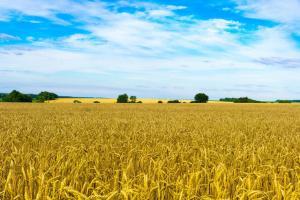 Exporturile de cereale din Ucraina au scăzut față de 2020