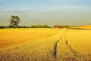 Prețurile mondiale la cereale au crescut în luna februarie