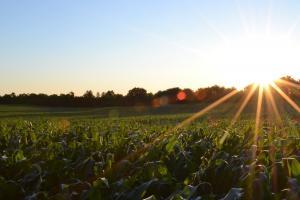 Cererea de porumb și soia pe piața mondială rămâne fermă