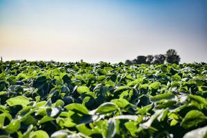 Raportul USDA din martie nu impresionează piața cerealelor