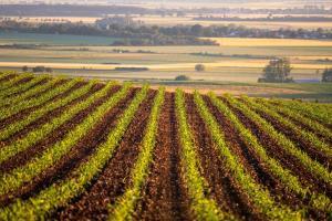 Preturile cerealelor nu vor fi afectate de raportul WASDE din martie