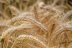 Bursa CME din Chicago adaugă grâul din Marea Neagră în cotațiile sale