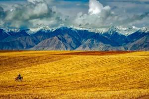 Asiaticii preferă la licitații grâul american