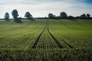 Tranzacțiile la grâu pe piața cerealelor sunt mai reduse în acest sezon