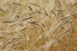 Rusia a stabilit impozitele pe exportul de cereale