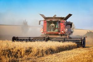 Prețul grâului încă nu se apreciază pe piața cerealelor