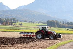 Prețul cerealelor este în creștere de la începutul acestui an