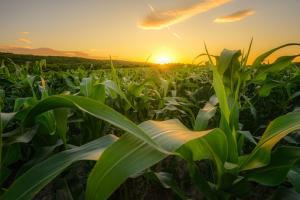 USDA - raportul WASDE pentru luna ianuarie 2021