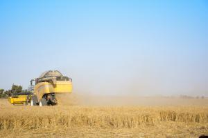 Licitația Egiptului provoacă scăderea prețurilor MATIF la grâu