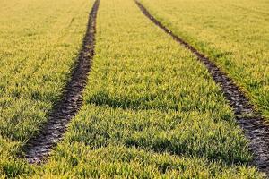 Prețul grâului va continua să scadă pe piața cerealelor