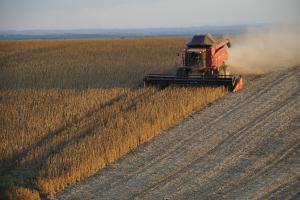 Producătorii din Brazilia cresc suprafața de cultivare de soia