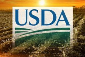 Raportul WASDE poate crește prețului grâului pe piața cerealelor