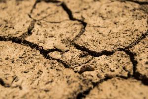 Seceta din SUA susține creșterea cotațiilor CBOT la cereale