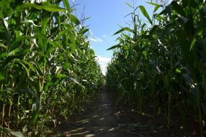 Producția de cereale în Argentina este sub presiunea taxelor la export