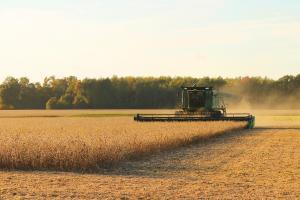 """Prețurile cerealelor se formează acum pe """"piața vremii"""""""