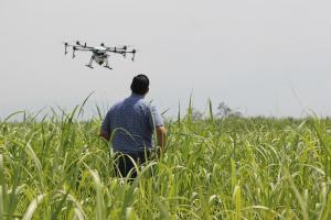 Cât va mai dura instabilitatea prețurilor pe piața cerealelor?
