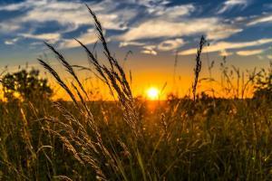 Vremea nefavorabilă încă afectează prețul cerealelor