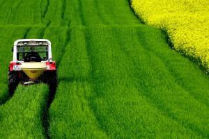 Prețul recoltelor vechi este susținut de vremea capricioasă