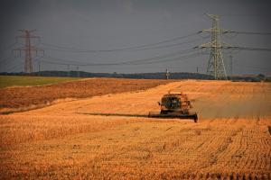 Comercianții români se despart de recolta veche de grâu