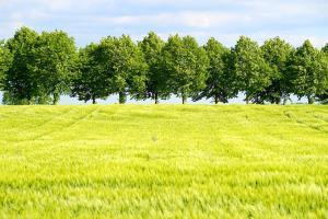 Starea culturilor de cereale și plante oleaginoase în SUA