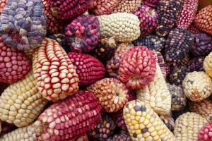 Prețurile porumbului conduc piața cerealelor