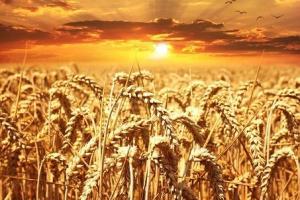 Luna februarie și mișcările pe piața internațională a grâului