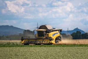 Producția de grâu poate atinge un nou record în regiunea Mării Negre