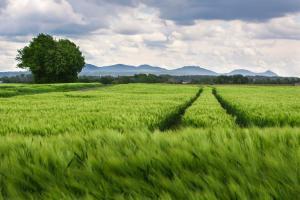 Cum se conturează prețul viitoarelor culturi?
