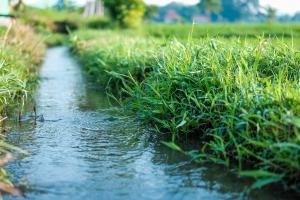 Cotațiile bursiere MATIF au scăzut ieri după ploile benefice culturilor europene