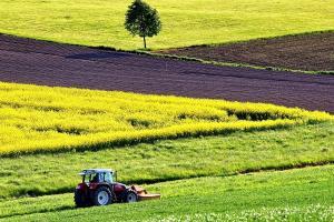 Piața cerealelor face eforturi să se stabilizeze