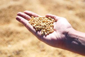 SUA  importă volume record de soia din Brazilia