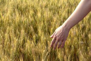 Prețul cerealelor începe să se consolideze