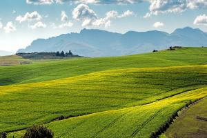 Anul 2021 pare a fi unul deosebit de bun pentru agricultorii români