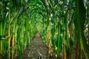 Piața cerealelor așteaptă clarificarea impozitului pe export al Rusiei