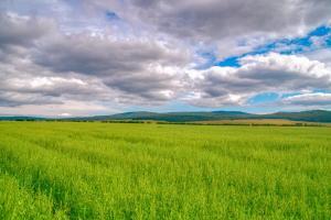 Prețul grâului din noua recoltă a scăzut în Rusia