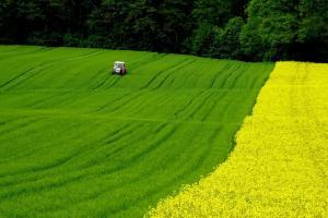Prețul grâului Matif se stabilizează