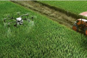 Prețul grâului vechi rămâne constant pe piața Mării Negre