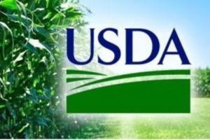 Raportul USDA are un impact major asupra porumbului și soiei