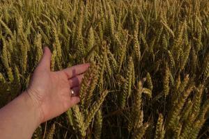 Vremea preia avantajul pe piața cerealelor