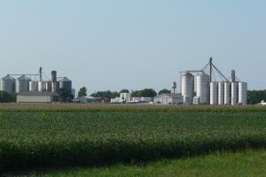 Aprecierea dolarului va afecta negativ prețul cerealelor
