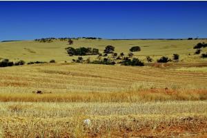 Australia și exportul de cereale