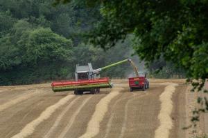 Japonia revine pe piață pentru grâul american