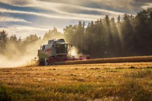 Cu un preț destul de ferm, grâul este căutat în licitații internaționale