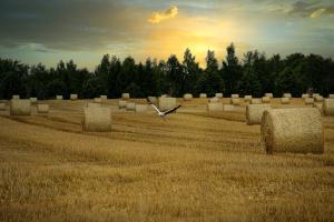 Este posibil ca prețurile cerealelor să mai scadă