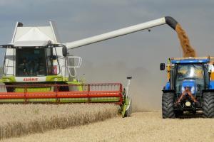 Egiptul cumpără din nou grâu românesc