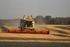 Marea Britanie este în căutare de grâu cu indice proteic ridicat
