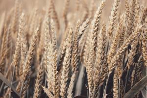 Iordania a renunțat la licitația de oferte pe grâu