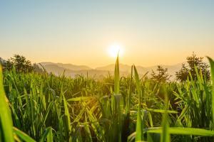 Prețurile cerealelor sunt impulsionate de rapoartele USDA