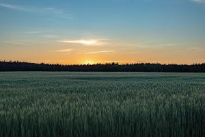 Franța va avea o producție mare la grâu, dar în scădere la orz și rapiță