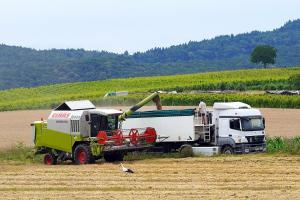 Prețul porumbului și soiei se află sub presiune